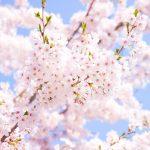 春になると自律神経失調症が増えるのはなぜ??